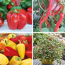 Pepper Plant Collection