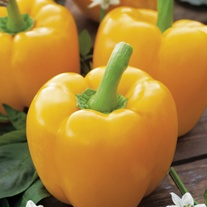 Mild(ish) Chilli Pepper Plant Collection