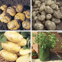 Late Cropping Potato Kit