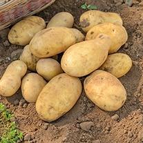 Potato (Maincrop) Jelly