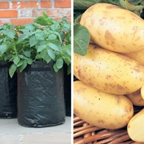 Second Cropping Charlotte Potato Kit