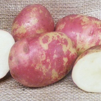 Potato Red King Edward (Maincrop Seed Potato)