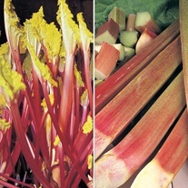 Rhubarb Crown Collection