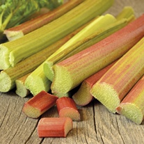 Rhubarb Apple Delight plant