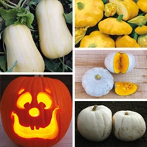 Squash and Pumpkin collection