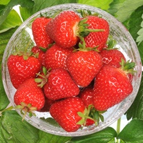 Misted Tip Strawberry Malling Centenary Plants