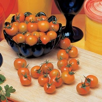 Tomato (Grafted) Sungold F1 (Cherry) Plants