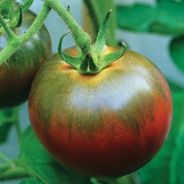 Tomato (Grafted Standard) Noir de Crimee Plants