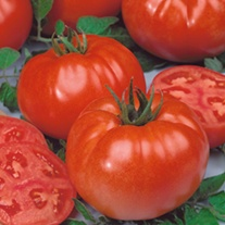 Tomato Buffalo Steak F1 (Beefsteak) Grafted Plants