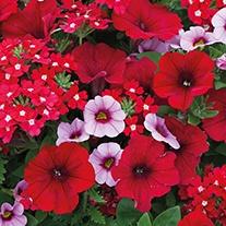 Trixi® Coco Bello Plants