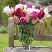 Sumptuous Tulip Bulb Collection