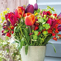 Opulent Tulip Bulb Collection