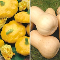 Squash 9cm Plant Collection
