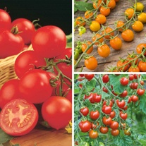 Tomato Indoor Plant Collection