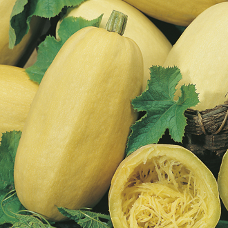 Squash (Summer) Vegetable Spaghetti Seeds