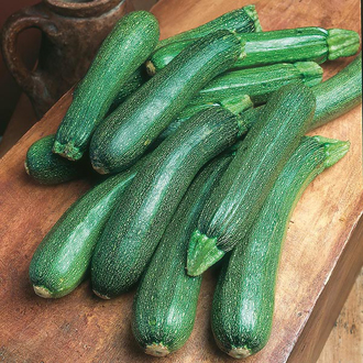 Courgette Patriot F1 Vegetable Seeds