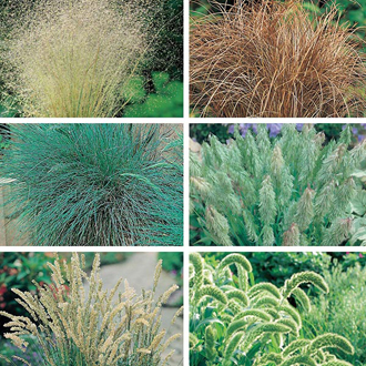 Ornamental Grasses Seed Collection