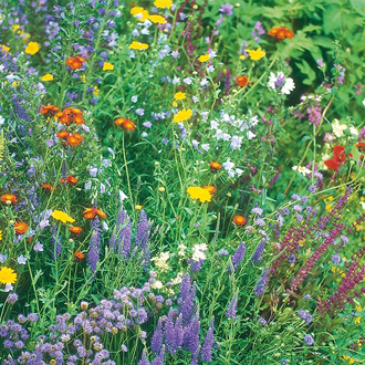 Wildflower Wildlife Mixture