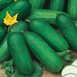 Cucumber Beth Alpha F1 Seeds