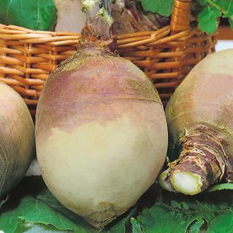 Swede Marian Seeds