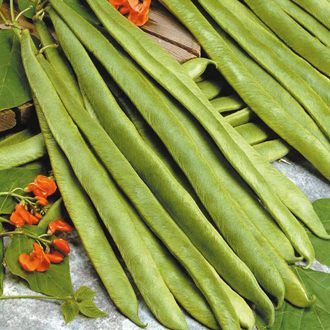 Runner Bean Scarlet Empire Seeds
