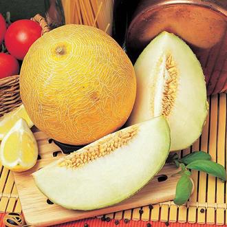 Melon Antalya F1 Seeds
