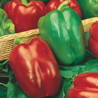 Pepper (Sweet) Californian Wonder Seeds