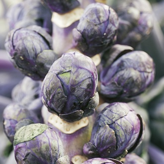 Brussels Sprout Rubine Seeds