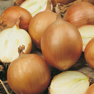 Onion Bonus F1 Seeds
