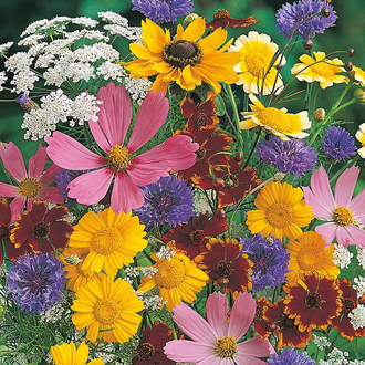Mixed Wildlife Attracting Annuals
