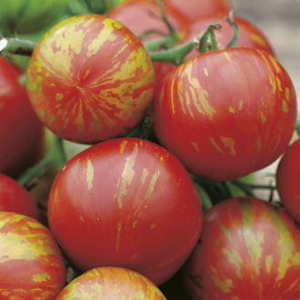Tomato (Standard) Tigerella Seeds