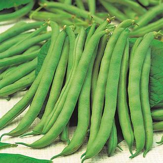 Dwarf Bean Tendergreen Seeds