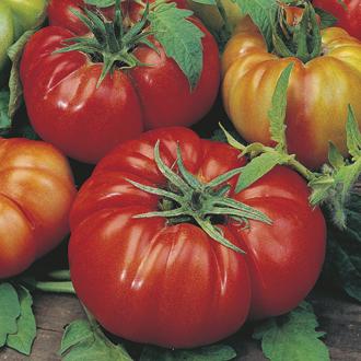 Tomato (Beefsteak) Costoluto Fiorentino Seeds