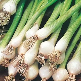 Onion (Spring) White Lisbon Seed Tape