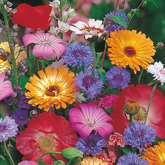 Mixed Annuals