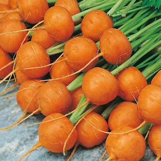Carrot Paris Market 5 - Atlas Seeds