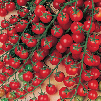 Tomato (Cherry) Sweet Million F1 Seeds