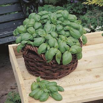 Basil Sweet (Organic) Seeds