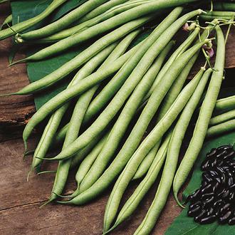 Climbing Bean Cobra Seeds