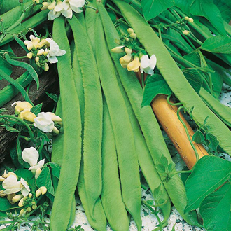 Runner Bean White Lady Seeds