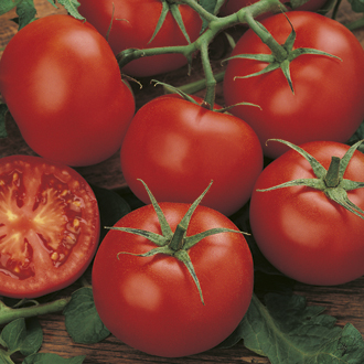 Tomato (Standard) Moneymaker Seeds