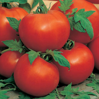 Tomato (Standard) Ailsa Craig Seeds