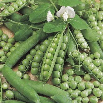 Pea Ambassador (Organic) Seeds