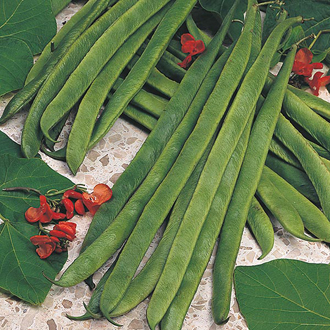 Runner Bean Armstrong Seeds
