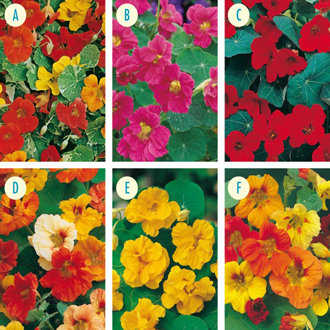 Nasturtium Seed Collection