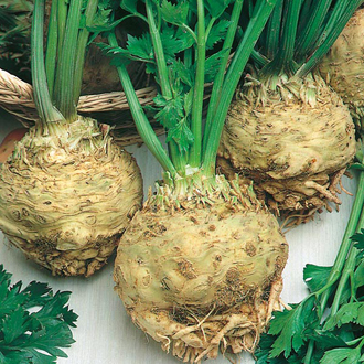 Celeriac Monarch Seeds