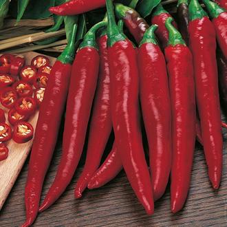 Pepper (Chilli) Rokita Seeds