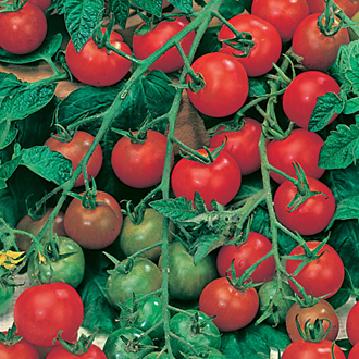Tomato (Cherry) Gardener's Delight Seeds