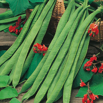 Runner Bean Crusader Seeds