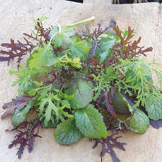 Salad Leaves Mustard Colour & Bite
